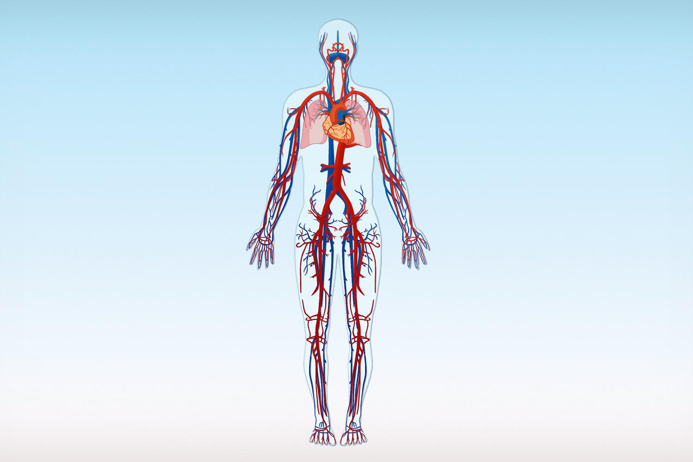 Praxis für Gefäßchirurgie Nordhorn